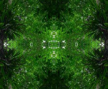 Treebackground2